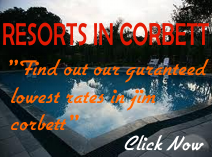 Resort in Corbett